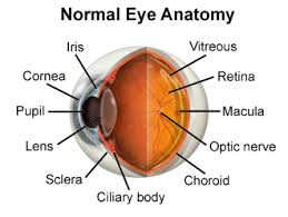 What Structure Of The Eye Focuses Light On The Retina Anatomy Of The Eye Including Iris Pupil And Cornea