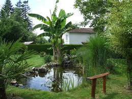 Backyard Bassin - 329 best bassin étang pond images on pinterest garden ponds