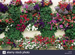 containers with petunia impatiens wall mounted hanging baskets