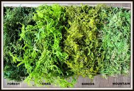 Moss Vase Filler Bulk Moss 1 1 2 Pounds Of Real Moss In 5 Styles Basket