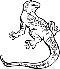 desert lizard coloring page great monitor lizard coloring pages great monitor lizard coloring