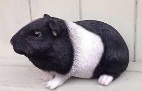 guinea pig black and white garden ornament arts indoor outdoor