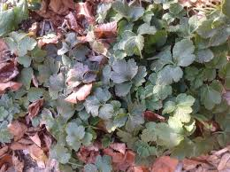 5 plants for a beautiful late fall garden hilltown families