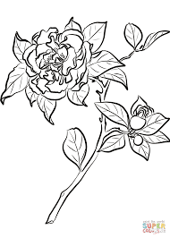 camellia japonica coloring page free printable coloring pages