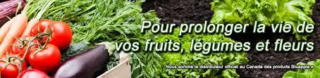 chambre froide pour fruits et l馮umes comment éliminer moisissure pourriture et chignon sur les