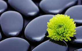 imagenes zen gratis flores piedras zen fondos de pantalla gratis