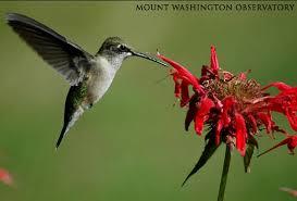 Hummingbird Flowers Journey North Teachers Manual Flower Powered Migratory Species