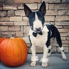 Pet Halloween Costumes Dogs 83 Dog Halloween Costumes Images Dog Halloween