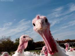 what peta wants you to do this thanksgiving vocativ