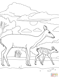 white tail deer baby and mother coloring page free printable