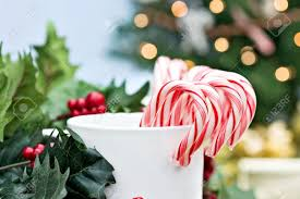 candy canes surrounded by holly branches with christmas tree