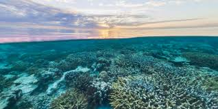Coral Reef Map Of The World by Street View Treks Great Barrier Reef U2013 About U2013 Google Maps