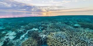Great Barrier Reef Map Street View Treks Great Barrier Reef U2013 About U2013 Google Maps