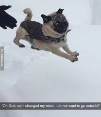 Funny Snow Meme - funny snow dog picture
