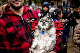 Pitchers Halloween Costumes Photos Dogs Halloween Costumes Cute Sad