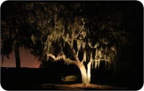 Hire Outdoor Lighting - outdoor lighting hire wedding u0026 events gloucestershire bristol