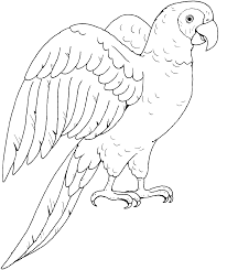 coloring pages nice parrot drawing clipart 13 coloring pages