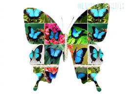the ulysses butterfly