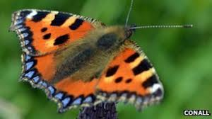 nature identify garden butterflies by wing colour and pattern