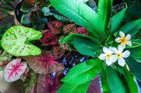 tropical plants grow indoors tropics home