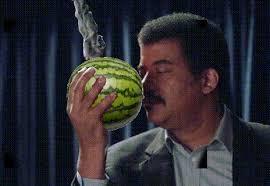 Watermelon Meme - do i smell watermelon stop das gay know your meme