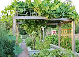chic grape arbor method seattle farmhouse landscape decorating