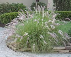 top ornamental grasses bomets types of grass for my