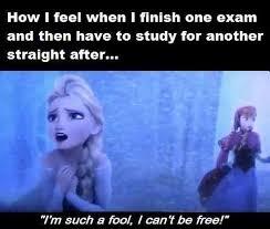 Exam Memes - exam meme feel study memes comics pinterest meme memes