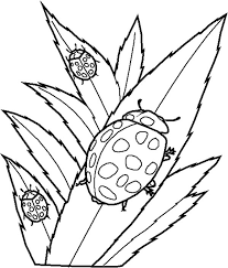 lady bug eating leaves coloring color luna