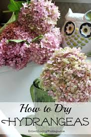 dried hydrangeas drying hydrangeas the right way