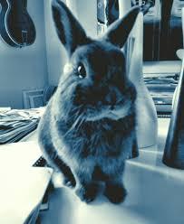my easter bunny my easter bunny dorian ty pennington