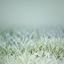 autumn made easy steps to winterize your lawn u0026 garden