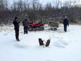moose found frozen in alaskan stream locked at antlers in fight