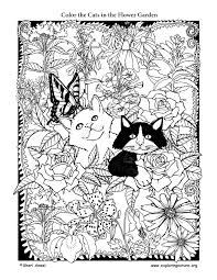 cats in the flower garden u2013 coloring page