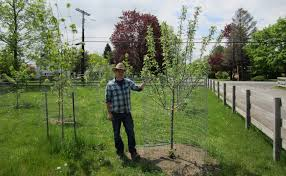 Backyard Fruit Trees Fruit Tree Orchard And Berry Patch Installation Natural