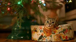 christmas cat wallpaper 75 images