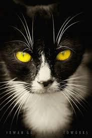 121 best cat eyes images on pinterest animals cats and cat eyes