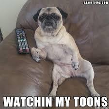 Funny Pug Memes - awww yisss saturday morning pug meme funny cute pugs