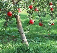 my tree the mid day fruit programme ganga parivar