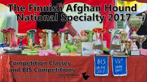 afghan hound of america the finnish afghan hound national specialty 2017 youtube