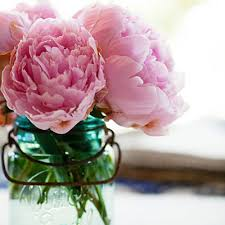 where to buy peonies pink peonies in jar peonies masons pink and