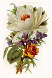 best 25 vintage flower prints ideas on pinterest vintage prints
