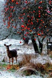 another pinner wrote we call them deer trees orchard or
