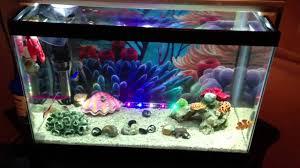 halloween fish tank background 5g finding nemo tank youtube