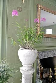 decorating with houseplants in winter the martha stewart blog