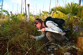 pollinators of native plants side effects of mosquito defense broad spectrum insecticides kill