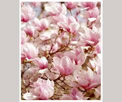 magnolia photography chic wall art pink flower vertical artwork