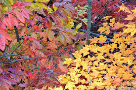 quotes about fall gardening why leaves fall from trees in autumn the national wildlife