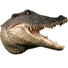 White Elephant Head Wall Mount Amazon Com Life Size Alligator Crocodile Head W Teeth Home
