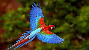 the most beautiful birds in the world phactual